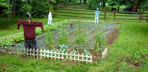 Vegetable Garden: Crop Rotation Made Easy | Today's Homeowner