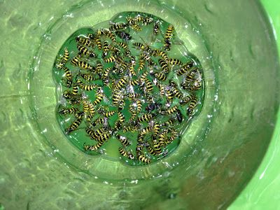Catch wasps  and not bees with this do it yourself cheap and easy wasp catcher   step by step directions