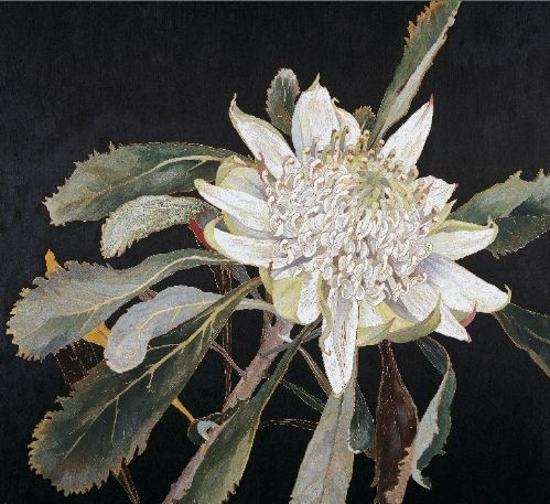 WhiteWaratah: woodblock print: Cressida Campbell