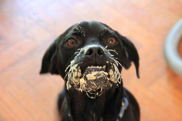 chien-degoutant-bouche
