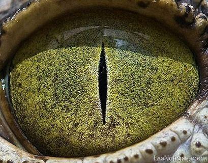 ¡Sorprendentemente bellos! Ojos de ojos de animales de cerca - http://www.leanoticias.com/2011/10/31/sorprendentemente-bellos-ojos-de-ojos-de-animales-de-cerca/