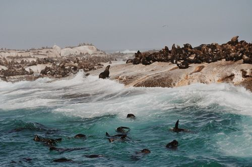 Seal Island/ Capetown