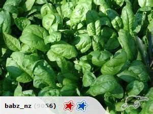 Spinach Santana | Trade Me