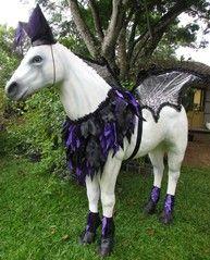 290 best halloween horse costume images on pinterest horses black princess costume the horse tailor solutioingenieria Gallery