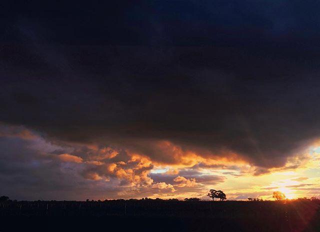 Sunset tonight. #Coonawarra #mextures #vineyards #sunset #sunrise_and_sunsets