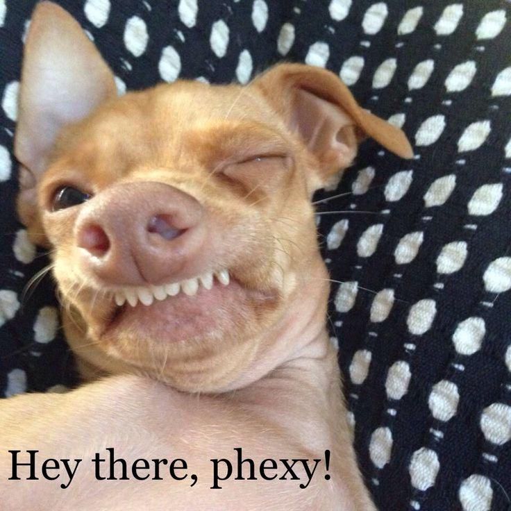 325 best Phteven images on Pinterest | Tuna melts, Tuna ... - photo#25