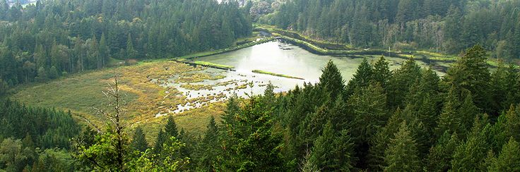 Minnekhada Regional Park  (view from high knoll) Port Coquitlam 2 1/2 hour trails ..... this is where Jeanne would go to spend time back in the 80's