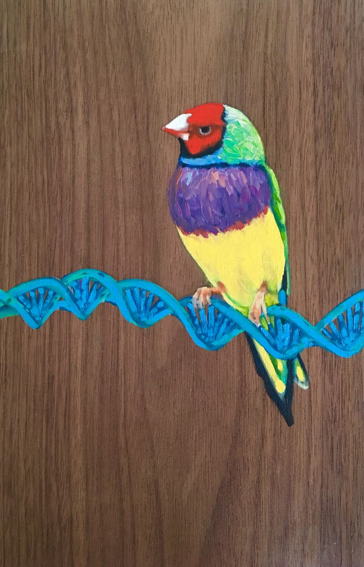 DNA Bird series, by Renata Waterfall oil on Walnut 19cmx29cm - modern genetics and biological engineering point to an author.