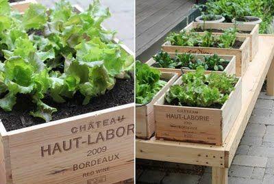 Garden vegetables in wine boxes