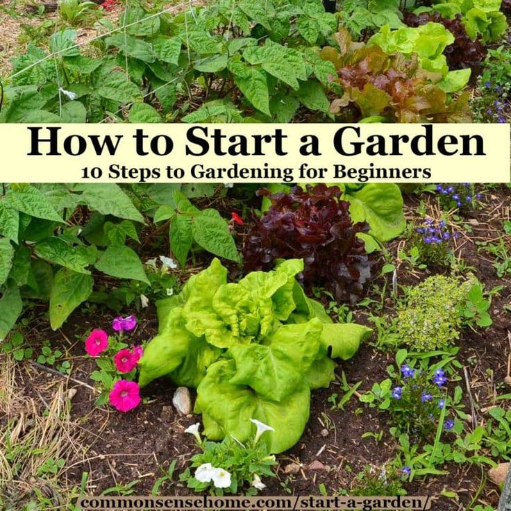 How To Start A Garden – 10 Steps To Gardening For 400 x 300