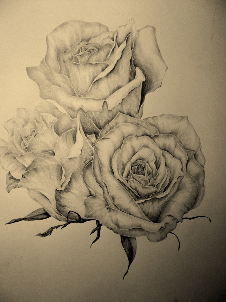 117 best images about amazing sketches on pinterest for Amazing drawings of roses