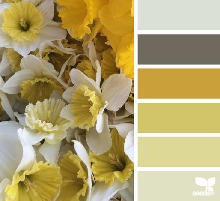 daffodil hues