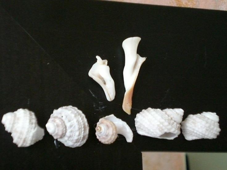 Button Snails
