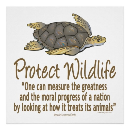 """""""One can measure the greatness and the moral progress of a nation by looking at how it treats its animals."""" -Mahatma Gandhi"""