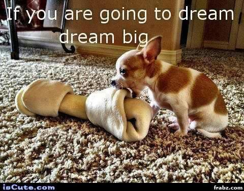Cute pup:)