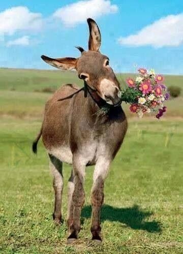 Un omaggio floreale per tutte augurandovi il buongiorno