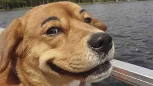Картинки по запросу фото кошек и собак смешные