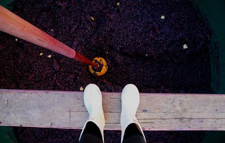 В Калифорнии Грант Тэйлор работал с такими сортами, как мерло и каберне совиньон, а в Новой Зеландии, в силу особенностей местного климата, он с самого начала решил применять свои знания и опыт по отношению к пино-дуар.  Ahipara Luxury Travel New Zealand #новаязеландия #вина #отаго #туроператор #гид