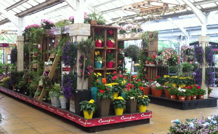 Planted bedding plant containers Squires Garden Centre Twickenham