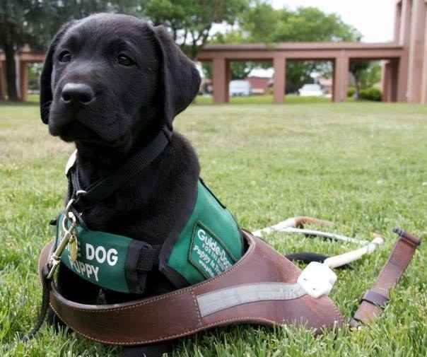 Image result for guide dogs with child