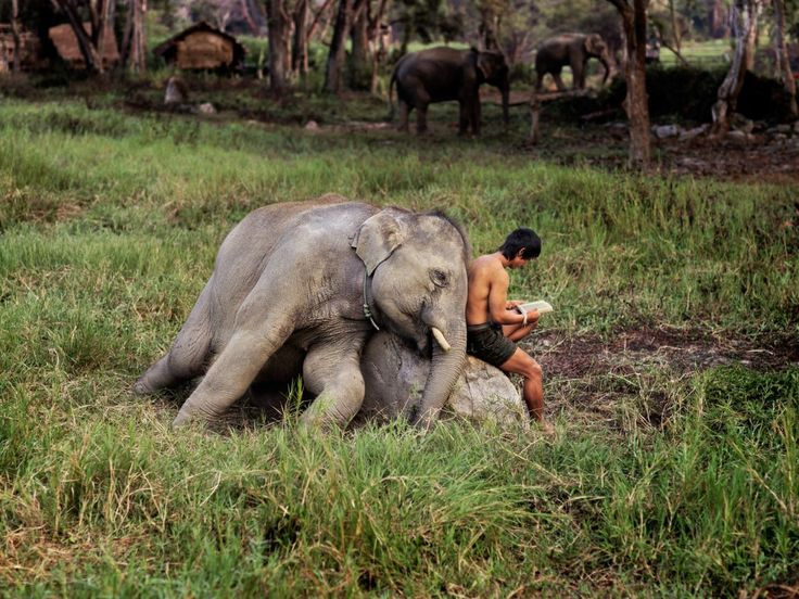 #Mainstream #Science Finally #Recognizes The Consciousness of Animals – BM Pak – Cathy Kent