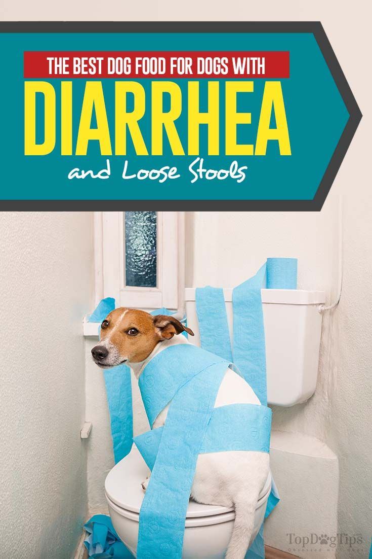 The Best Dog Food For Dogs With Diarrhea And Loose Stools Best