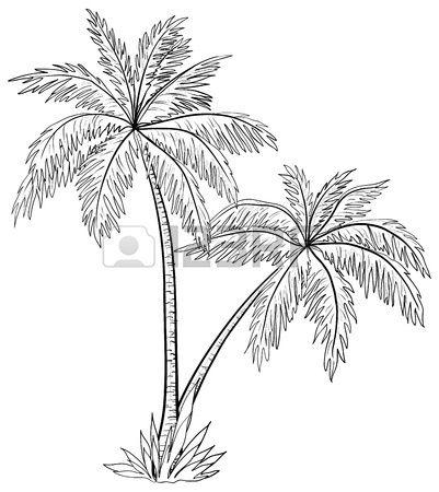 Vecteur des palmiers feuilles les contours monochromes sur fond blanc Banque d'images