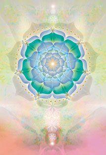 the blooming lotus