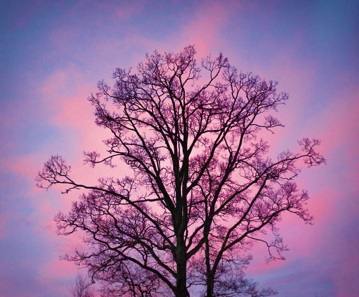 Cotton Candy Tree by lucanii  on 500px - Sweden