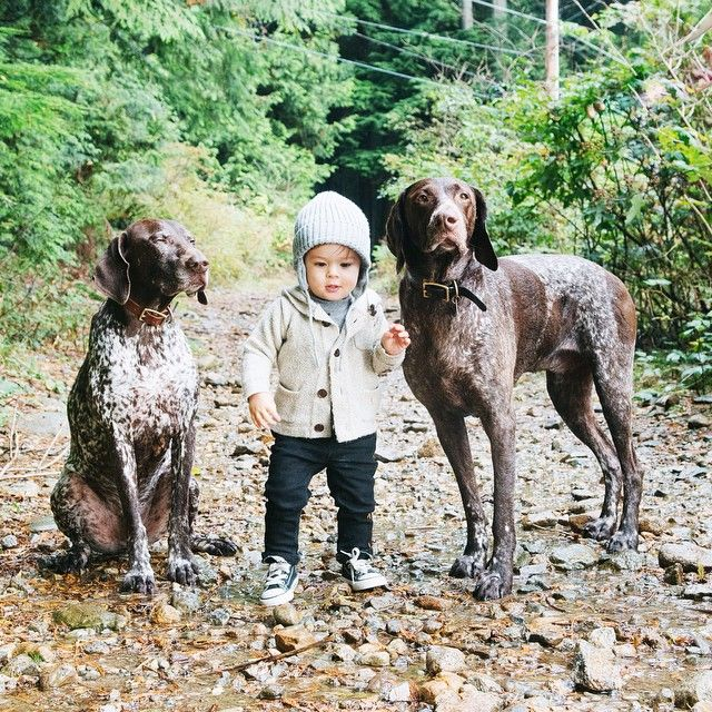 The Pointer Brothers #GSP - German Shorthaired Pointer - #Braque Allemand