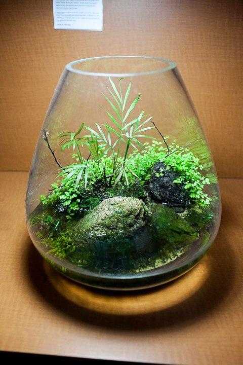 157 besten aquarium terrarium paludarium riparium wabi kusa bilder auf pinterest. Black Bedroom Furniture Sets. Home Design Ideas