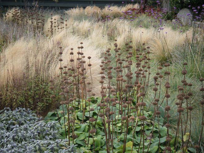 A coastal garden with limey soil & a very active rabbit population! :: Quercus Landart