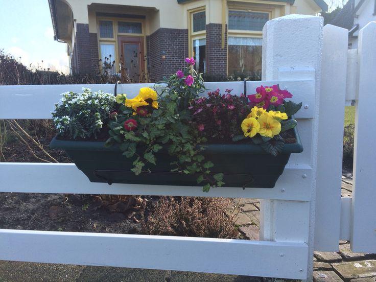 Vrolijke voorjaarsbloemen!