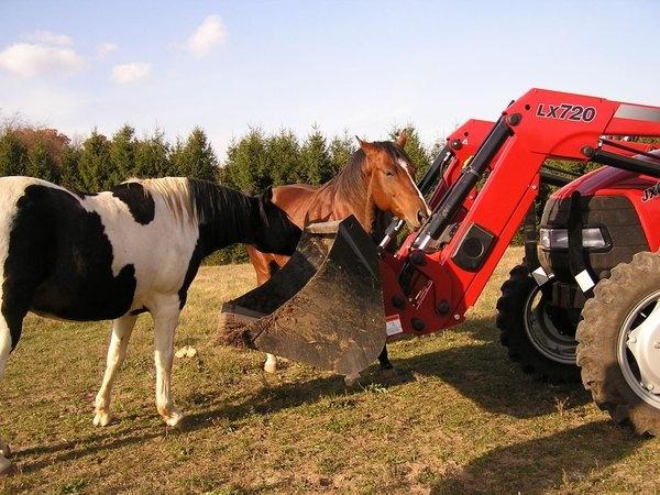 noisy horses!