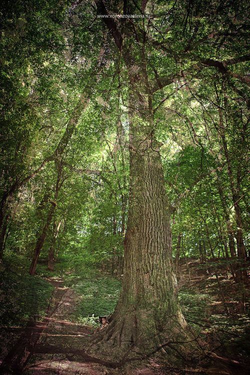Сказки старого леса