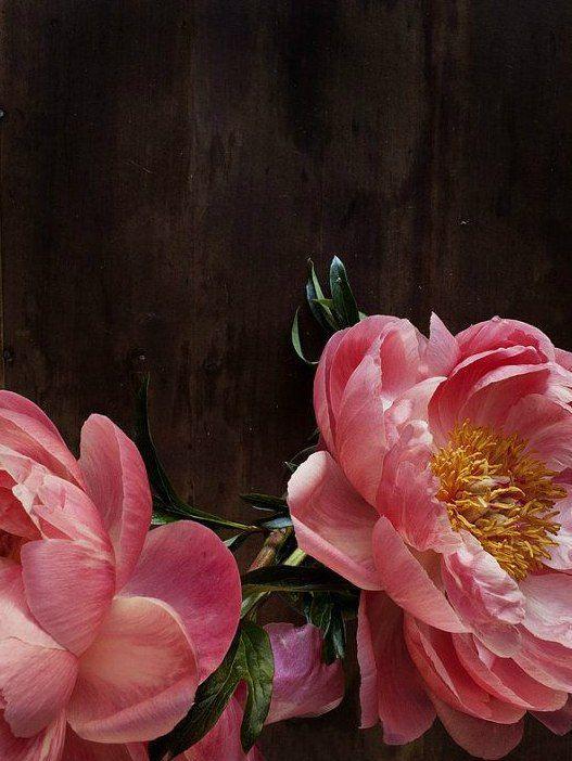 МИР КРАСОТЫ в цитатах, картинках, стихах..|Весна | Цветы ...