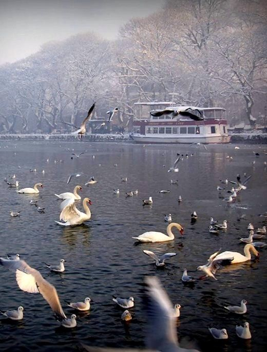 Visit Greece | A stunning winter view of Lake Pamvotida in Ioannina. #Epirus #Greece #visitgreece
