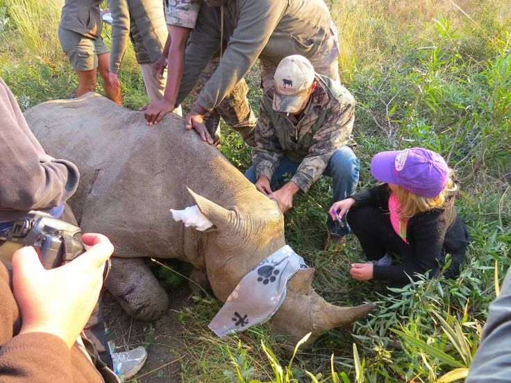 Rhino notching: every guest had a role to play – blog – Rhulani