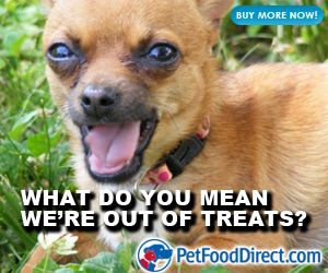 Dogs With Dog Food