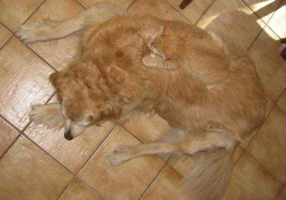 Gatto e cane rosso