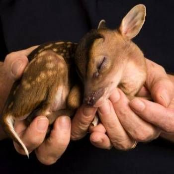Cute baby deer, look at that tiny baby, think of that being hunted, I have one thing to say to those hunters out there that are wiling to kill this, SHAME ON YOU!