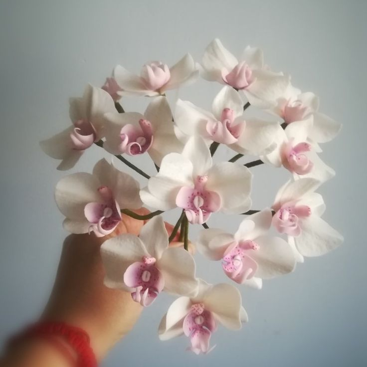 Sugar butterfly orchid
