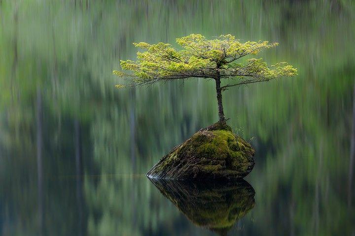 Standing Alone: Photographers, Bonsai Trees, Wildlife Photography, Baby Need, Islands, Animal, Nature Photo, Fairies Bonsai, Adam Gibbs