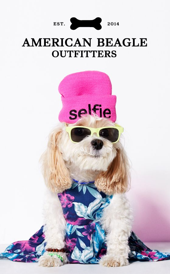 The new line from American Eagle Outfitters is here... American Beagle Outfitters! Check it out exclusively at ae.com/dogs.