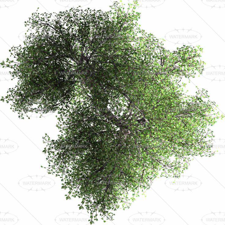 tree interior wallpaper