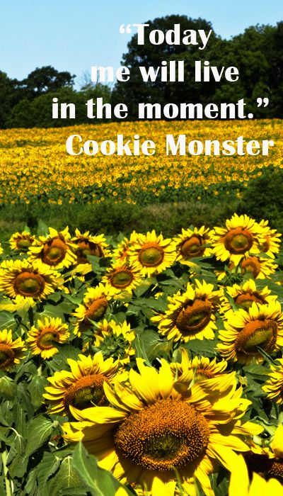 """Today me will live in the moment.""  Cookie Monster – Truly sound advice; explore insightful quotes on the power of life's journey at http://www.examiner.com/article/travel-a-road-of-literate-quotes-about-the-journey"