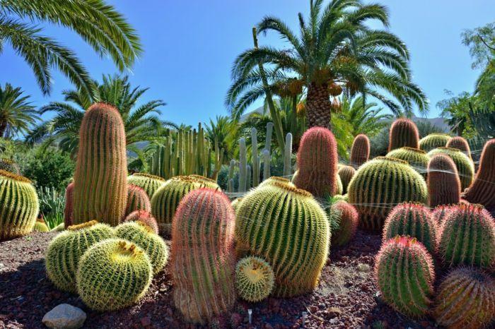 Grands Cactus Dans Un Jardin Botanique Palmiers Plantes Grasses