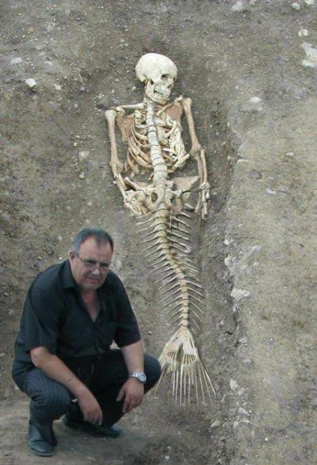 mermaid bones. Real ???