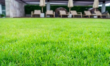 Perths best commercial fake lawn
