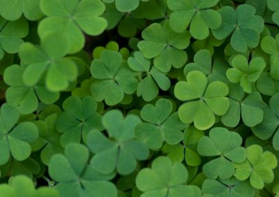 """HowStuffWorks """"How St. Patrick's Day Works"""""""